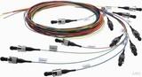 Telegärtner LWL Pigtail-Set 12SC schwarz G50 OM4 TN-PS-12SC-50-OM4